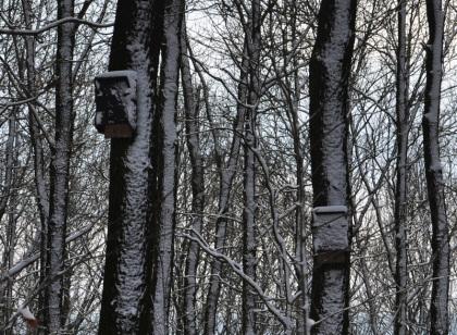 Wintervogelhaus
