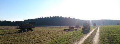 Rindergarten