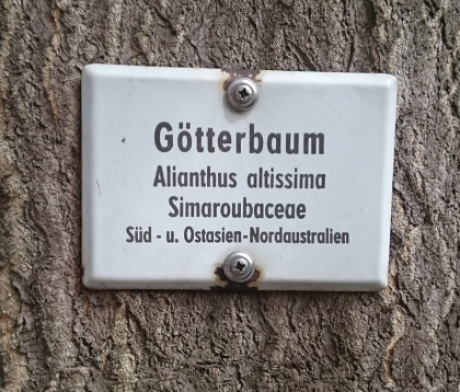 goetterbaum